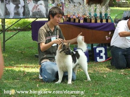 http://topicstock.pantip.com/jatujak/topicstock/2006/04/J4273040/J4273040-19.jpg