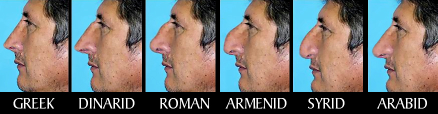 Image result for types of noses full size image